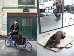 Hunde-Reisebett