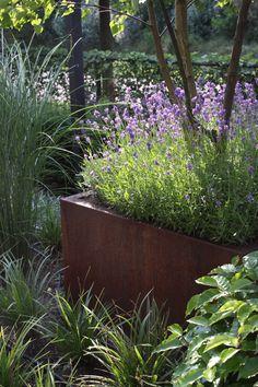 Sfeerplaatje met lavendel en wintergroene zegge (Carex morrowii 'Ice Dance').