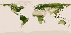 La planète verte - La Nasa et la NOAA ( National Oceanic and Atmospheric Administration ) ont réalisé cette carte de la Terre par sa végétation.