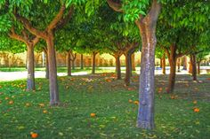 Giardino degli Aranci - Roma