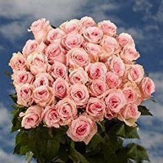 50 Fresh Cut Pink Roses | 16-18 Inches Long Stem | Fresh Flowers Express Delivery | Perfect for Valentine's Day, Anniversary or any occasion.