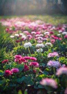 flora bokeh #nature #photography