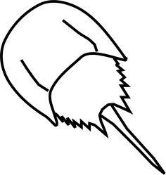 Horseshoe Crab by Gosc - Chelicerata, Limulid, Pfeilschwanzkrebs, Xiphosura, animal, biology, black and white, clip art, clipart, contour, e...