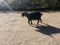 Duncan trotting in the sunshine!