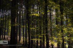 Az erdőben..In the forest by gyulakaszas69