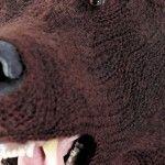 Brown Bear. Crochet