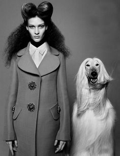 Dogs and fashion. Always. best in show by daniel jackson