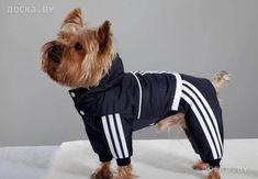Картинки по запросу выкройки одежды для собак средних пород