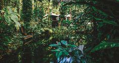 La végétation luxuriante de palmiers, fougères et palétuviers qui vous entoure bruisse des sauts d'oiseaux et des acrobaties de petits singes.Le bruit de la rivière vous réveille doucement. Il est …