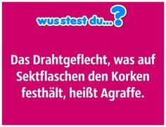 ...wie das Drahtgeflecht auf Sektflaschen heißt? -  http://www.wusstest-du.com/wp-content/uploads/2016/06/Drahtgeflecht-auf-Sektflaschen-1024x787.jpg - http://www.wusstest-du.com/wie-das-drahtgeflecht-auf-sektflaschen-heisst/