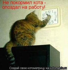 Лучшие котоматрицы. Обсуждение на LiveInternet - Российский Сервис Онлайн-Дневников