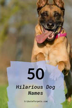 Need a laugh? These 50 hilarious dog names are sure to make you smile. Punny Dog Names, Puppy Names, Dog Care Tips, Crazy Dog, Dogs Of The World, Dog Behavior, New Puppy, Happy Dogs, Dog Grooming