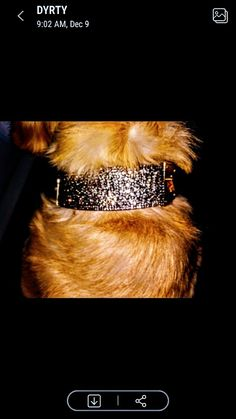 Story Videos Telling Visual Designer Dog Collars, Story Video, Classy Chic, Large Dogs, Hand Sewing, Bling Bling, Videos, Rhinestones, Larger