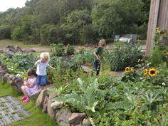 Lochside veggie plot
