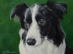"""Dogs portrait painting of Border Collie """"Shelby"""", 10x12"""" #dogportrait #petportrait #dog #pet #painting"""