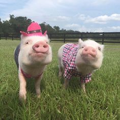 Howdy friends! Pop and I are heading out to do some exploring on the farm today! #country #farmlife #pasture #PrissyAndPop