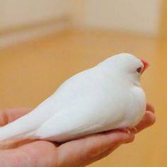 鳥奴必見《文鳥收納袋》完全再現肚子貼地的大福狀態(圓) - 圖片3