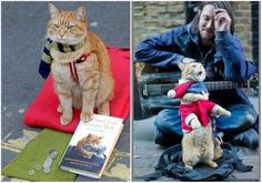 James died from drugs, when his life appeared cat   Animals