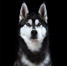 Portrait de chien 5