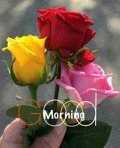 Tare liye apni jaan bhi derti do. Per tu muje meri terha pyar tu ker. Morning Rose, Good Morning Flowers, Good Morning Greetings, Good Morning Good Night, Good Morning Images, Yellow Roses, Red Roses, Good Day Sunshine, Rose Pictures