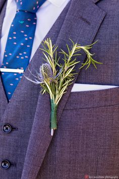 Thistle and rosemary boutonniere (and love that 3-piece grey suit and royal blue tie with tiny schools of fish).