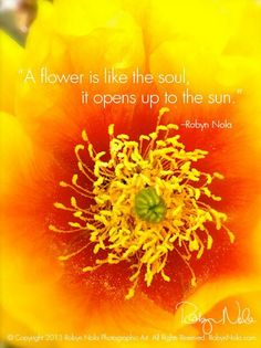 A #flower is like the soul..... #quotes
