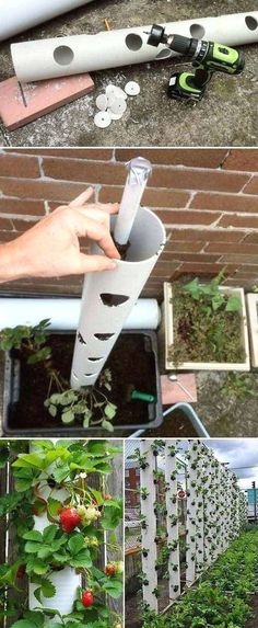 Grow sweet strawberry in a vertical PVC tube is great… #garden tips, herb #garden, fairy garden, balcony garden #legging #shirts #tshirts #ideas #popular #everything #videos #shop #tshirtideas