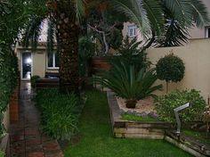una gran palmera