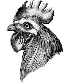Design art drawing doodles ink 17 ideas for 2019 Rooster Tattoo, Rooster Art, Chicken Drawing, Chicken Art, Ink Pen Drawings, Animal Drawings, Design Art Drawing, Art Drawings Beautiful, Desenho Tattoo