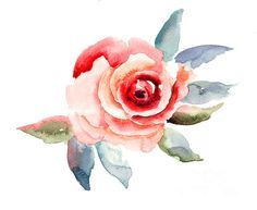 Rose Flowers Illustration