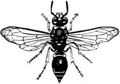 Wasp http://etc.usf.edu/clipart/26300/26366/potterwasp_26366_lg.gif