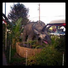 There's so many friendly dinosaurs to pal around with at Eastside Big Tom's!  #eastsidebigtoms #bigtoms #dinosaurs #dinosaur #triceratops #creative #jurassic #fun #food #local #art #family #community #local #burgers #Olympia #Washington #WA #PNW #Lacey #mymixx96