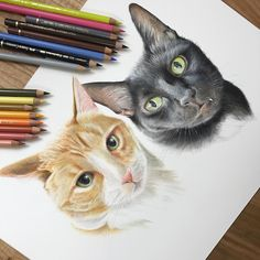 Cats. Wildlife and Domestic Animal Drawings. By Paul miller.