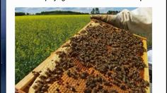 37 Million Bees Instantly Dropped Dead After Farms Started Spraying Neon...