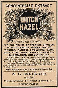 A bottle label for Witch Hazel. At the time this was the go to cure for many dermatological ailments. Offering relief from piles, bruises, scalds, burns, rheumatism, insect bites, etc.