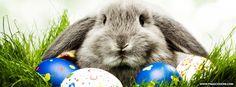 Easter Bunny Rabbit Facebook Cover