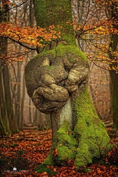 Sleeping Dragon tree knot~  Lars Vance Goor