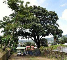 Costa Rica│Costa Rica - #CostaRica
