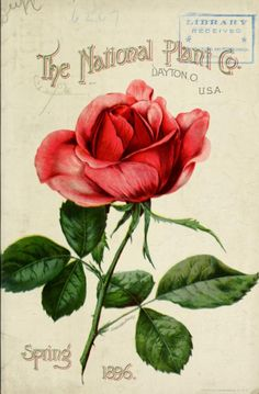 Front cover of 'The National Plant Co's' Spring 1896 catalogue with an illustration of an 'American Beauty' rose.The National Plant Co. Dayton. O.U.S. Department of Agriculture, National Agricultural LibraryBiodiversity Heritage Library. archive.org