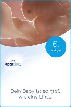 SSW 6: Dein Baby hat in der letzten Woche einen großen Wachstumssprung gemacht. Nun beginnen Arme und Beine zu wachsen. Movie Posters, 6 Weeks Pregnant, Pregnancy Weeks, Legs, Film Poster, Popcorn Posters, Film Posters