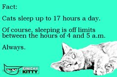 Fact: Cats sleep up to 17 hours a day. Of course, sleeping is off limits between the hours of 4 and 5 a. Cat Sleeping, Cool Cats, Kitty, Facts, Cool Stuff, Memes, Day, Little Kitty, Kitten