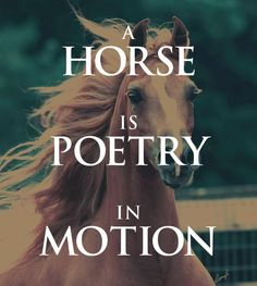 Find this Pin and more on Horse Quotes.
