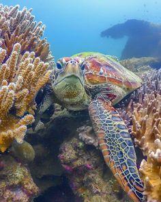 19 Ideas For Tattoo Nature Animals Sea Turtles Save The Sea Turtles, Baby Sea Turtles, Cute Turtles, Underwater Animals, Underwater Sea, Animals Beautiful, Cute Animals, Turtle Life, Sea Turtle Art