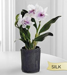 Silk Pink Cattleya Orchid Plant in Black Terra Cotta Container- Shown