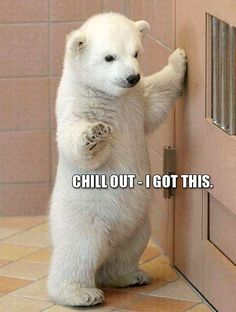 Baby polar bears know whats up