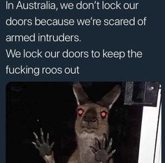 "Top Relatable Memes Australia These ""Top Relatable Memes Australia"" will make you laugh so hard. So scroll down and keep reading these ""Top Relatable Memes Australia"". Australian Memes, Aussie Memes, Australian Accent, Really Funny, Funny Cute, The Funny, Funny Koala, Koala Meme, Funny Animals"