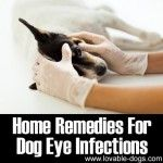 Home Remedies For Dog Eye Infections