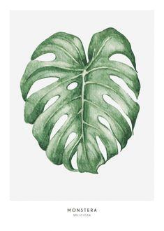 Illustration of monstera leaves...
