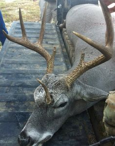 3 antlered buck - I love the different, interesting ones like this, I want one for my wall