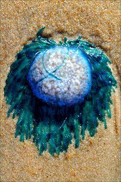 Blue Button Jellyfish Jellyfish Art, Sea World, Attic, Dream Catcher, Ocean, Button, Beach, Blue, Sweet Home